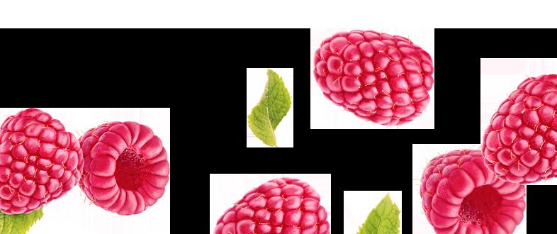 Mad Magic Raspberry Kombucha Ingredients